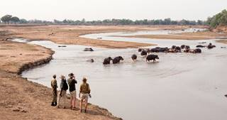 Shenton Safaris' Walking Safaris 39 - Hippo.jpg