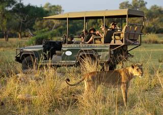 Game Drive Lions Bush Camp Company.jpg