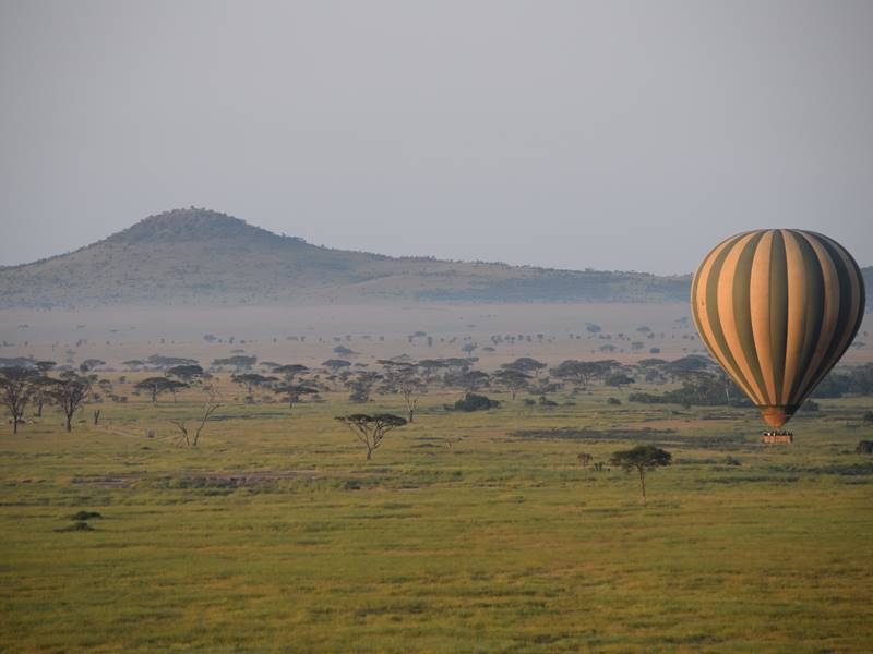 Balloon Safaris_Flipped.jpg