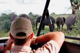 Namibia_Watching Elephants.jpg