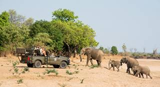 Shenton Safaris' Game Drive 14 - Elephant.jpg