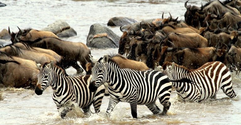 Atta Webinar: Intimate Places: Camp Zebra - following the Great Wildebeest Migration around the Serengeti National Park