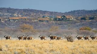 1Safarihoek - Landscape -Eland with Lodge (1).jpg