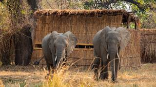 Tafika-Hide_elephants.jpg