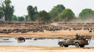 Shenton Safaris' Game Drive 7 - Buffalo.jpg