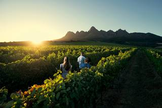Vineyard, Winelands, South Africa.jpg