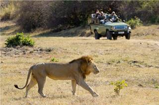 Game drive with lion.jpg (1)