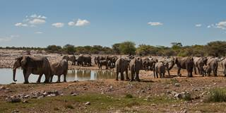 Elephant at watering hole, Namibia.jpg