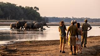 Walking-Takwela-Camp_elephants-crossing-the-Luangwa-2019.jpg