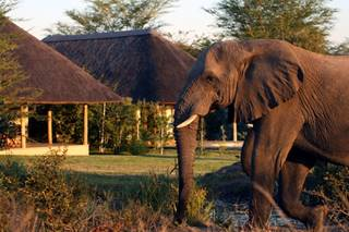 Savanna Lodge, Elephants.jpg