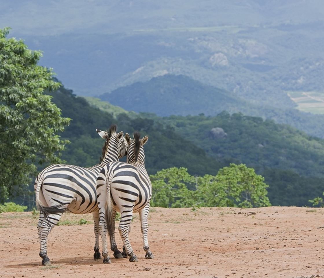 Download: Summary Of Changes To Jenman African Safaris
