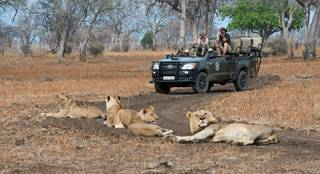 Shenton Safaris' Game Drive 29 - Lion.jpg