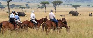 Riding Safaris Riding with Eles.jpg