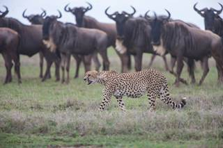 #serengeti #safari #wildlife #berlin #ITB.jpg
